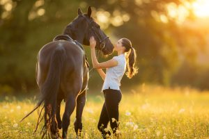 Pleasure Horse Wellness Plan TOP IMAGE